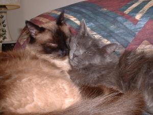 Natasha and Bandit